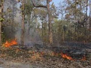 ४७ सामुदायिक वनमा आगलागी : बाह्र सय हेक्टर वन क्षेत्रमा क्षति