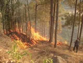 रेसुंगा वनमा लागेकाे आगो नियन्त्रण बाहिर, मानवबस्ती समेत जोखिममा
